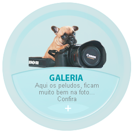 Galerias Planet Dog Resort